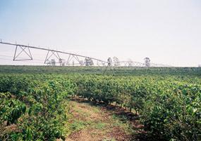 灌漑設備(水やり)
